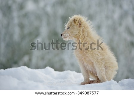 cute little white dog outdoor in winter