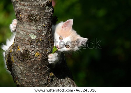 Cute little white kitten sitting in tree.