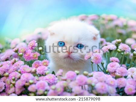 Cute little white Scottish fold kitten sitting in flower lawn - stock photo