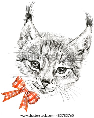 Cute lynx pencil sketch animal illustration