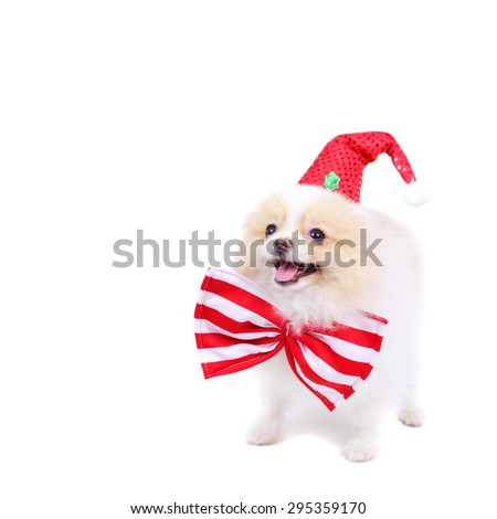 cute merry smiling spitz puppy - stock photo