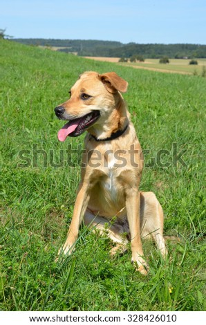 Cute mixed breed dog