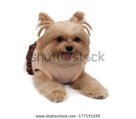 cute mixed breed dog in a happy mood looking at camera isolated in white background with clipping path