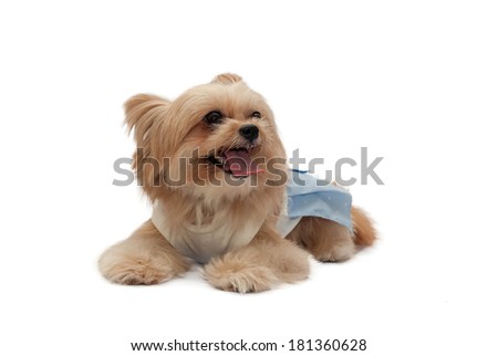 cute mixed breed dog in relaxation pose isolated in white back ground with clipping path