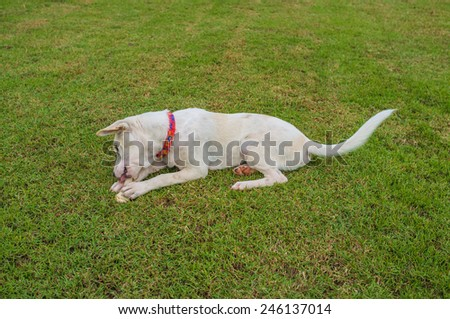 cute mixed breed dog lying in the green garden - stock photo