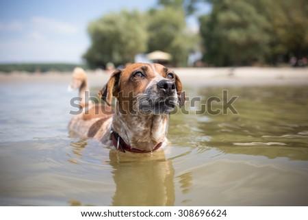 Cute mixed breed dog on vacation - stock photo