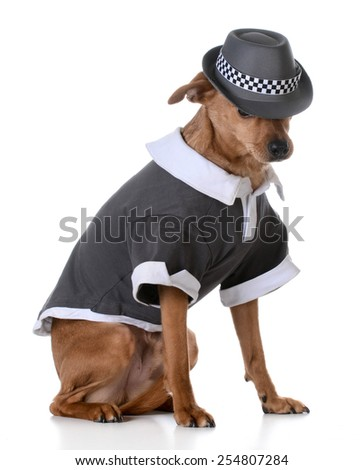 cute mixed breed dog wearing a shirt and fedora on white background