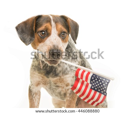 Cute mixed breed dog with flag