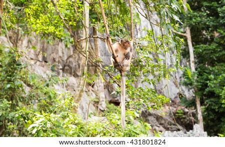 cute monkey lives in a natural forest of Thailand.