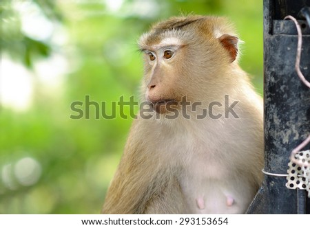 Cute Monkey 're looking at something - stock photo