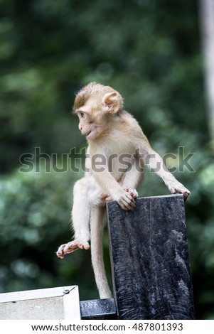 Cute monkey sitting on wood,in Thailand forest.