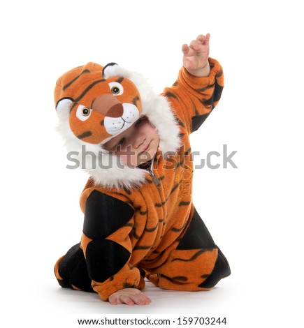 Cute 18-month-old baby boy in a tiger costume for Halloween on white background - stock photo