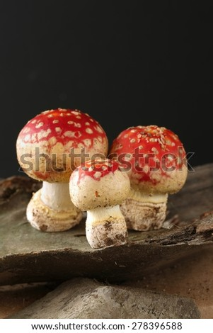 Cute mushrooms that resemble a family group sitting on a wooden stand on a black background