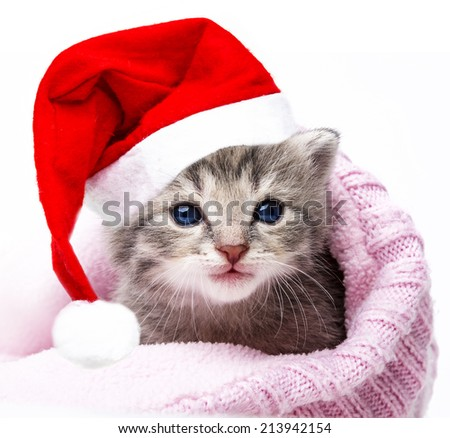 cute newborn kitten with santa cap - stock photo