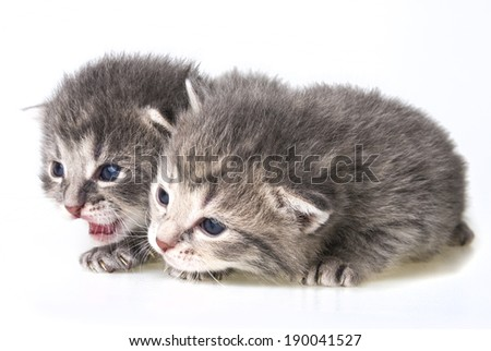 cute newborn kittens close up