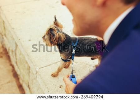 cute nice  Yorkshire terrier stands near the owner - stock photo