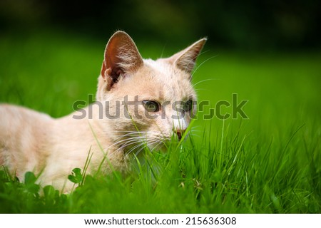 Cute orange cat on the green grass - stock photo