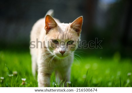 Cute orange cat on the green grass