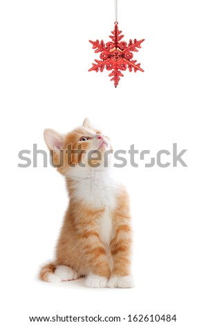 Cute orange kitten playing with a red Christmas snowflake ornament on a white background.