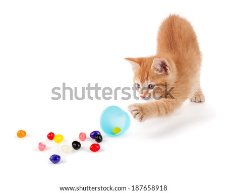 Cute Orange Kitten spilling colorful jellybeans out of a plastic Easter egg isolated on a white background. - stock photo