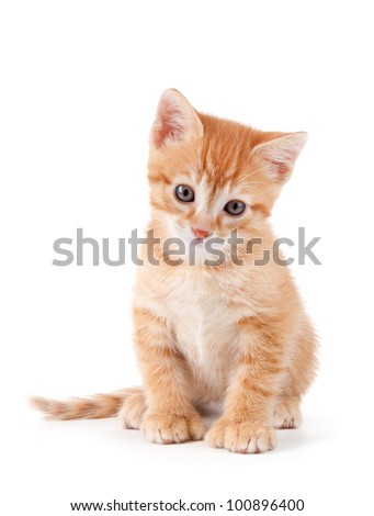 Cute orange kitten with large paws on a white background. - stock photo