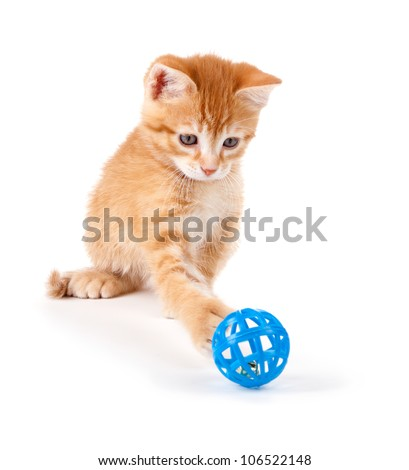 Cute orange kitten with large paws playing with a toy on a white background. - stock photo