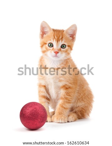 Cute orange kitten with large paws sitting next to a red Christmas ball ornament isolated on a white background. - stock photo