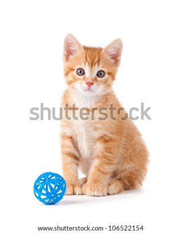 Cute orange kitten with large paws sitting next to a toy on a white background. - stock photo