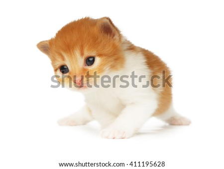 Cute orange red and white kitten. Cute serious kitten 2 weeks old, creeping isolated at white background. Adorable pet. Small heartwarming kitten. Little cat. Closeup isolated. High key - stock photo