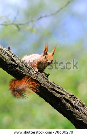 cute orange squirrel sitting on the tree stick