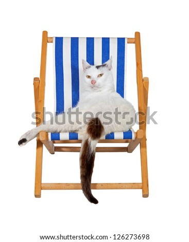 Cute pampered family cat relaxing in comfort on a deckchair isolated on white, fun image conceptual of a summer vacation - stock photo