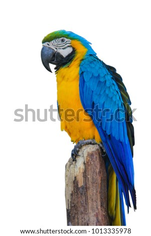 cute parrot isolated on white background and clipping path on picture