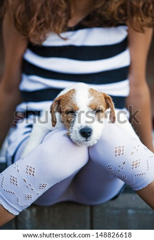 cute Parson Russell Terrier puppy lies sleeping on the knees of a young girl