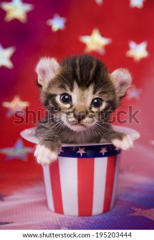 Cute Patriotic kitten on red, white and blue background in Uncle Sam Hat