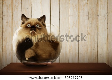 Cute persian cat inside glass bowl on the wooden desk - stock photo