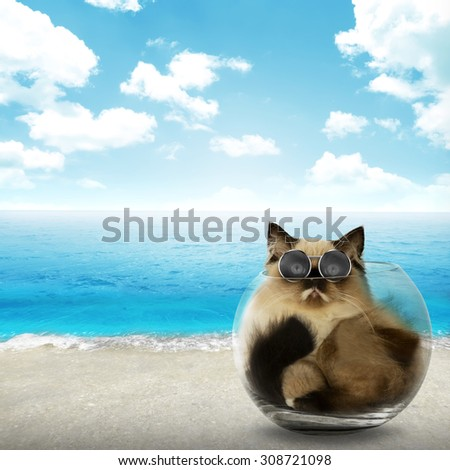Cute persian cat inside glass bowl with beach background - stock photo