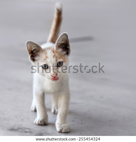 Cute pet cat portrait. Playful and sweet expression. - stock photo