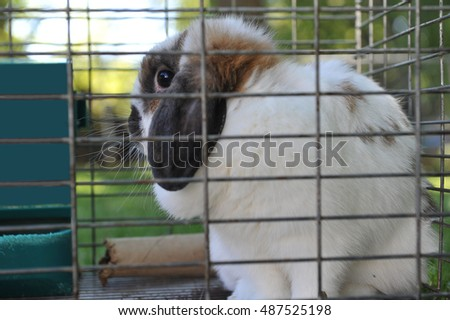Cute pet rabbit looks out the side of its wire framed cage.