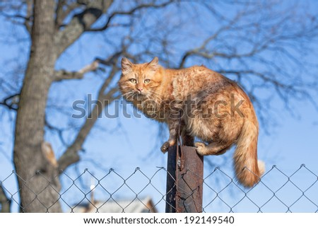 Cute pet red cat sitting in a tree and looking around - stock photo