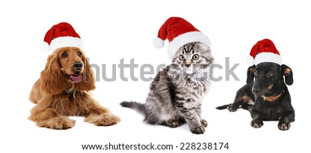 Cute pets in Santa hat isolated on white - stock photo
