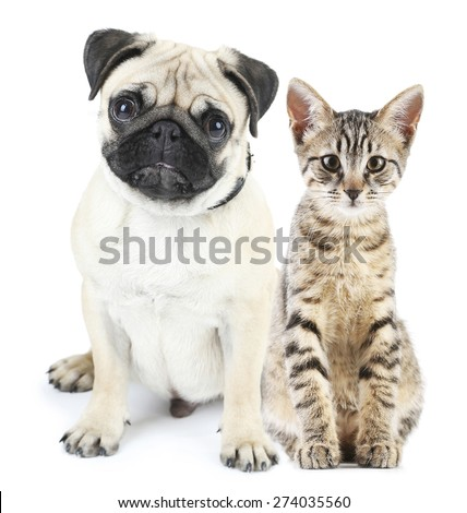 Cute pets isolated on white - stock photo