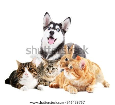 Cute pets, isolated on white