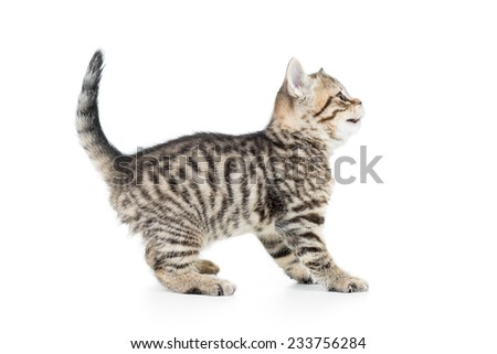 cute playful kitten cat isolated on white - stock photo