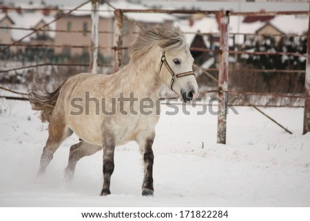 Cute pony galloping in the snow in paddock - stock photo