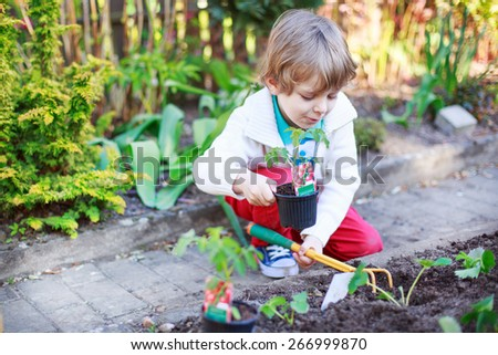 Cute preschool blond boy planting seeds and seedlings of tomatoes in vegetable garden - stock photo