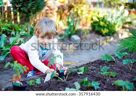 Cute preschool blond kid boy planting seeds and seedlings of tomatoes in vegetable garden. Happy carefree childhood. Funny child having fun with gardening in spring. - stock photo