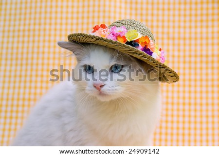 Cute pretty Ragdoll kitten wearing straw hat against yellow check background
