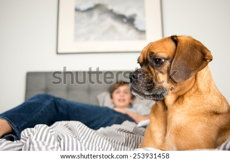 Cute Puggle Dog Relaxing in Bed Next to Child - stock photo