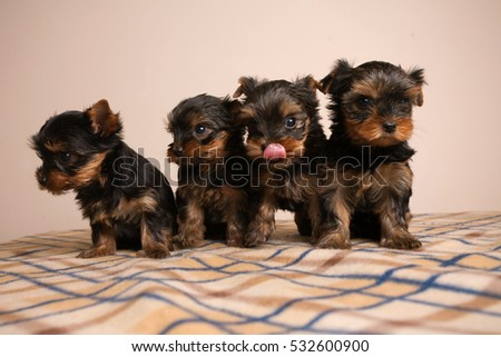 Cute puppies.