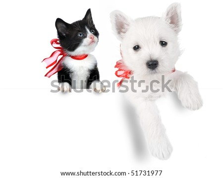 cute puppy and cat isolated on white - stock photo